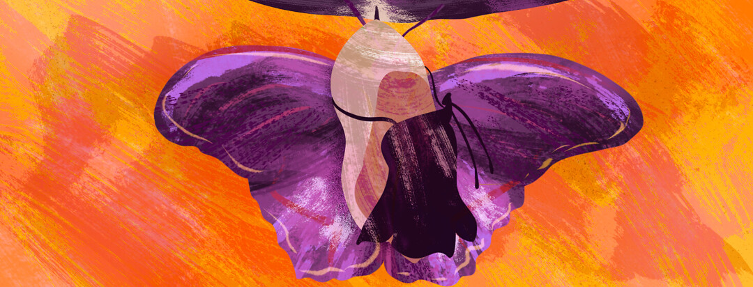 A chrysalis transforming into a butterfly with purple wins on a tree branch