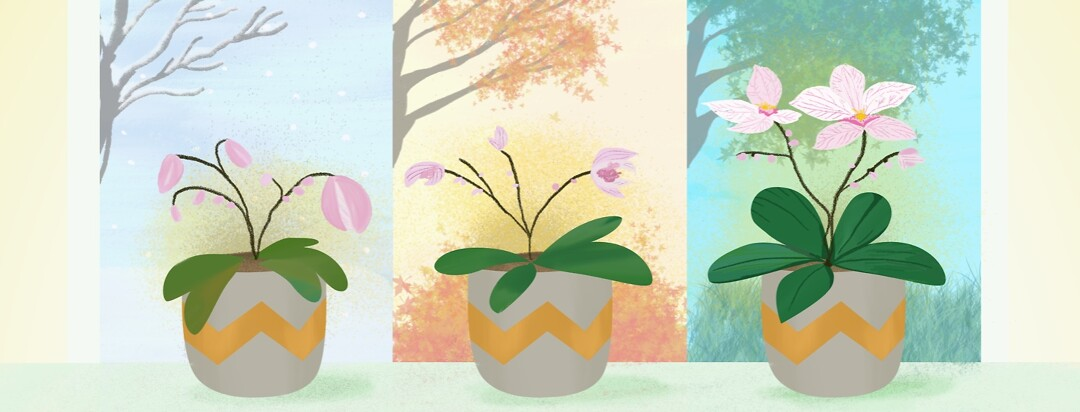 otted flowers, plants, orchids in front of a window showing the seasons of the year, moving from winter to fall, autumn to spring, and growing healthier from left to right.
